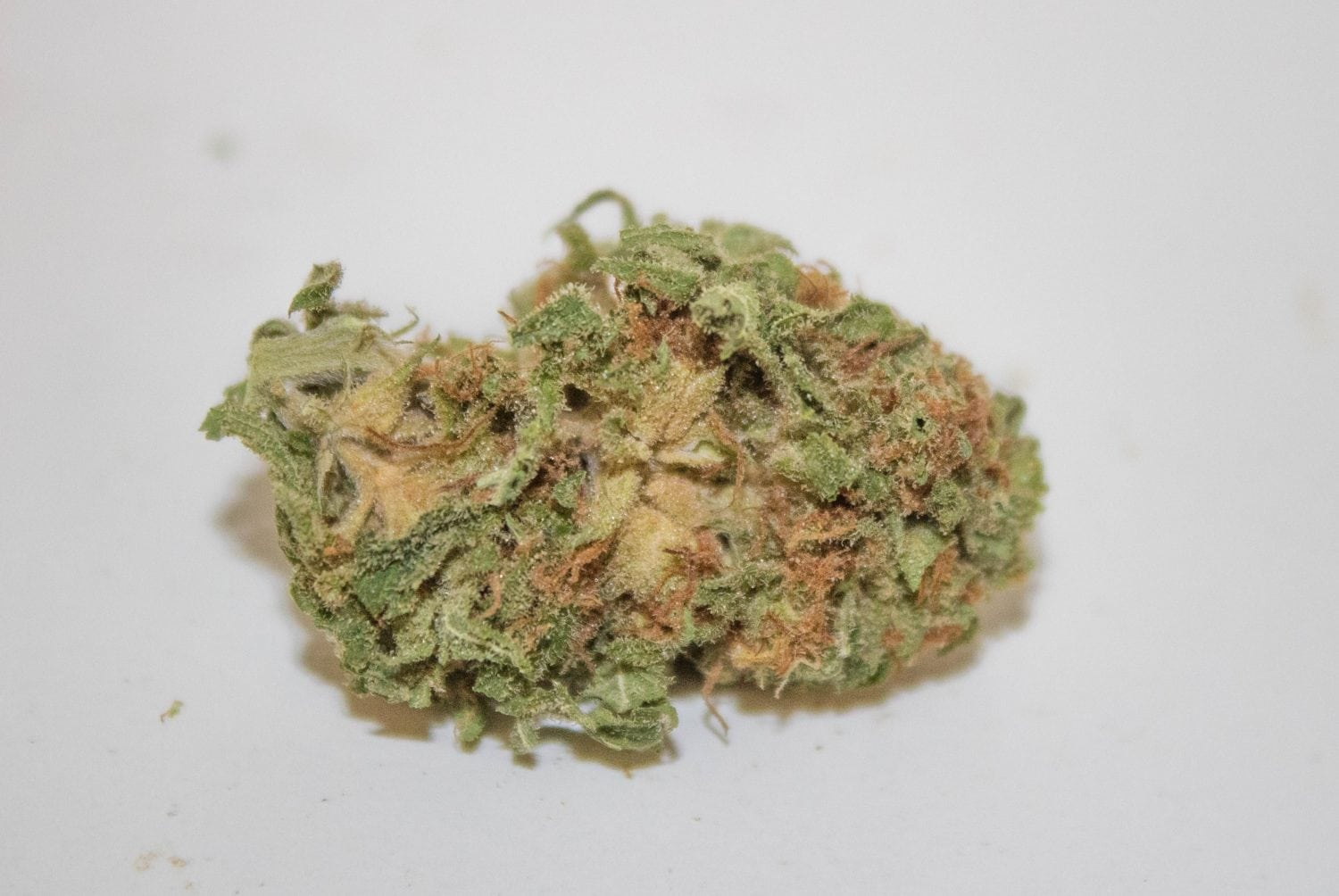 Read Our Official Review Of The Alien Orange Cookies Strain