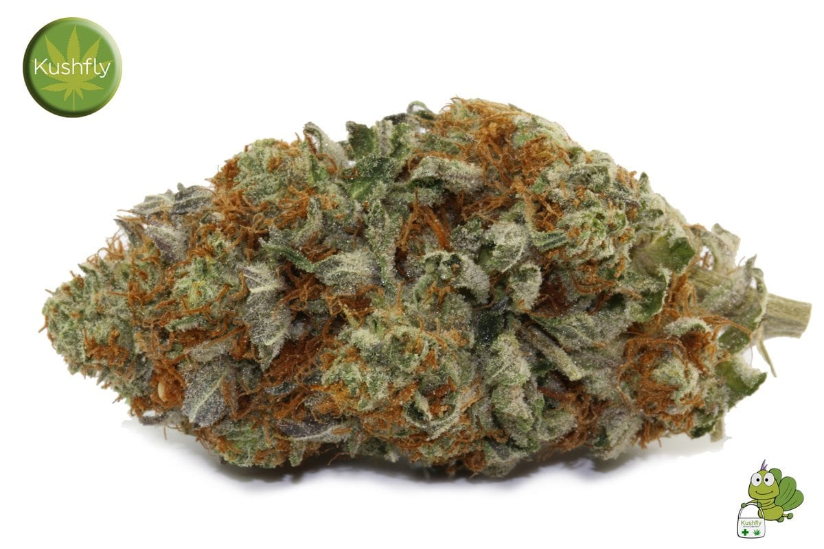 Alien Cookies Medical Marijuana