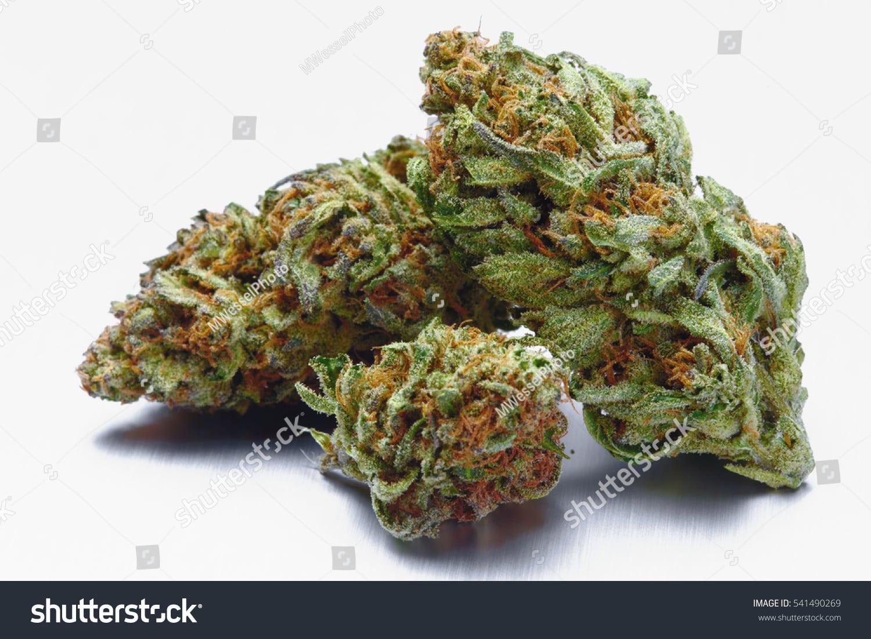 Close Blue Cookies Marijuana Buds On Stock Photo (edit Now