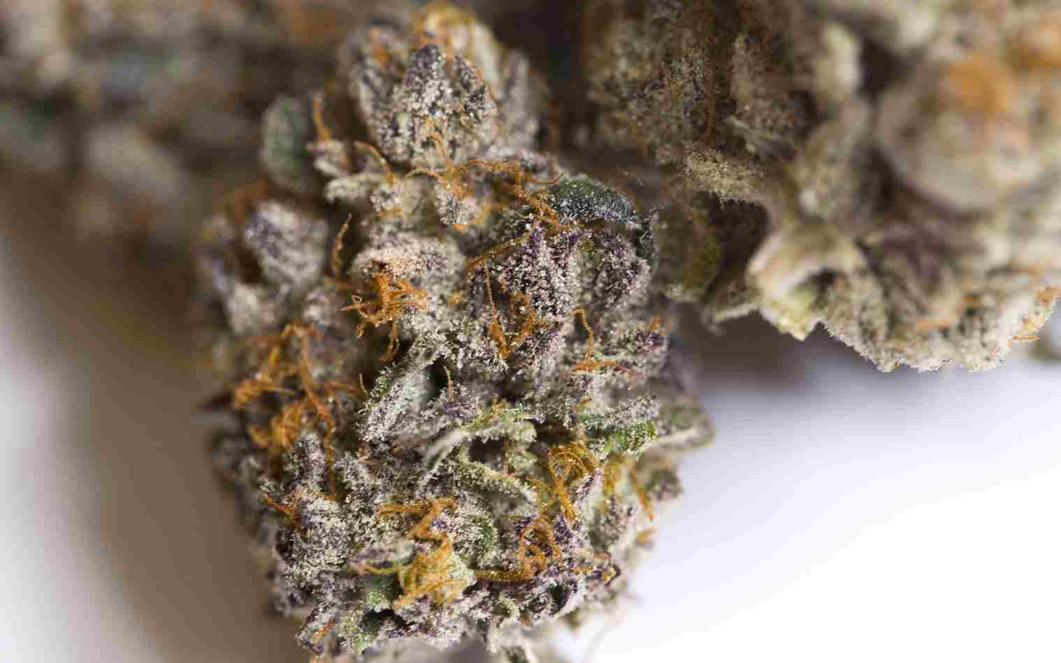 Cookies Strain Leafly Top Thcdominant Strains Of Washington State