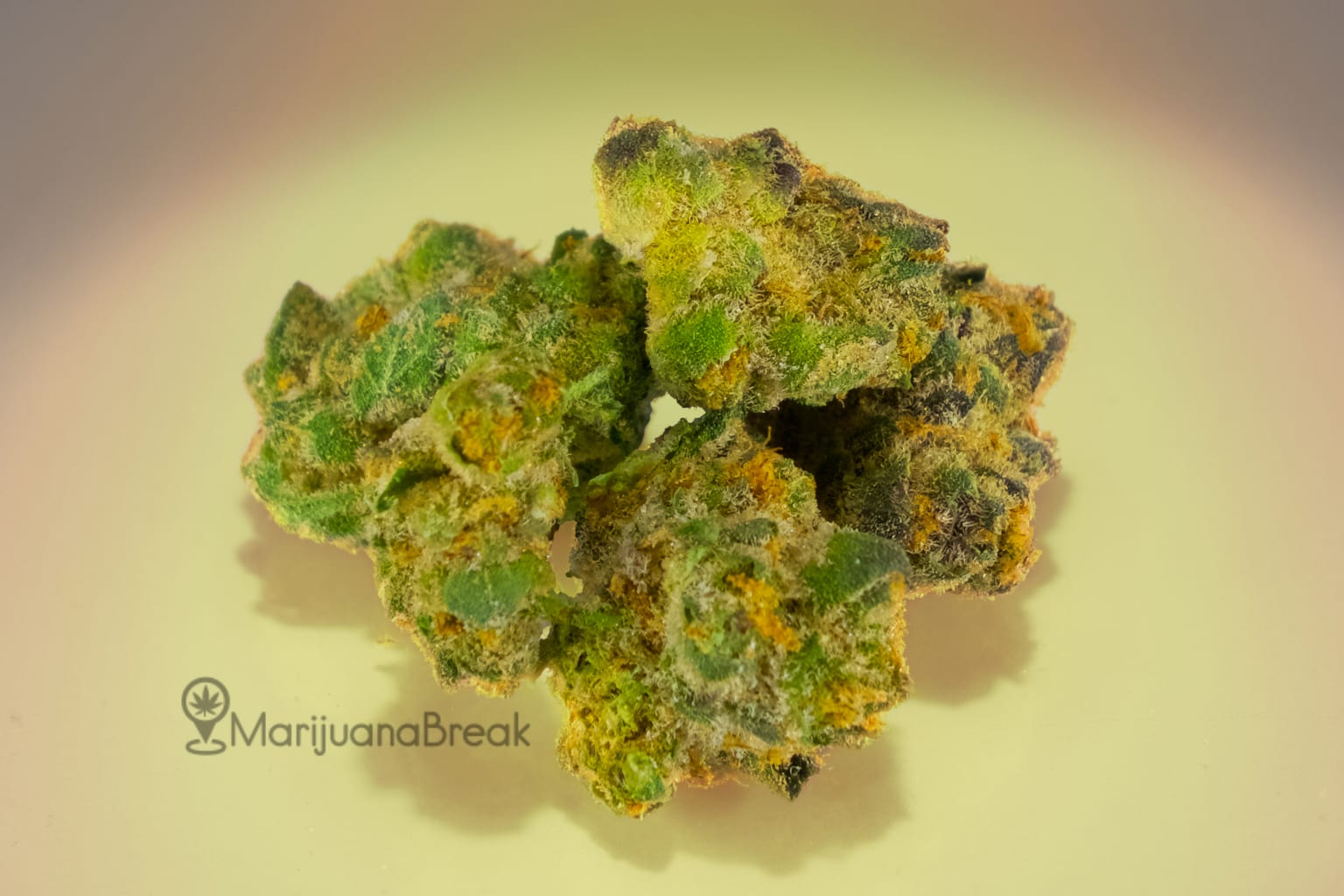 Girl Scout Cookies Strain (2018 Full Review)