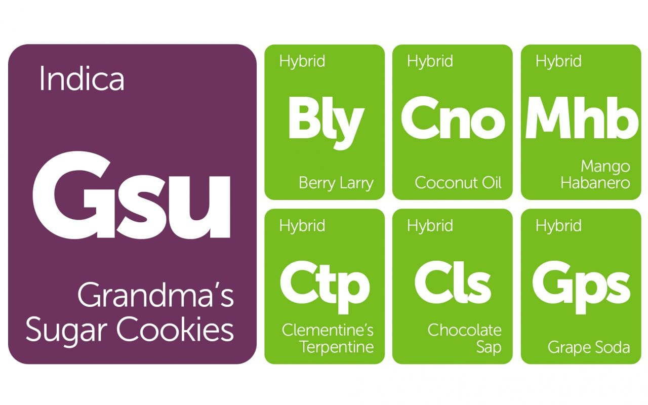 New Strains Alert  Grandma's Sugar Cookies, Chocolate Sap, And