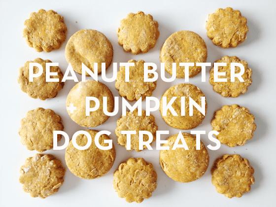 Pumpkin Dog Cookies
