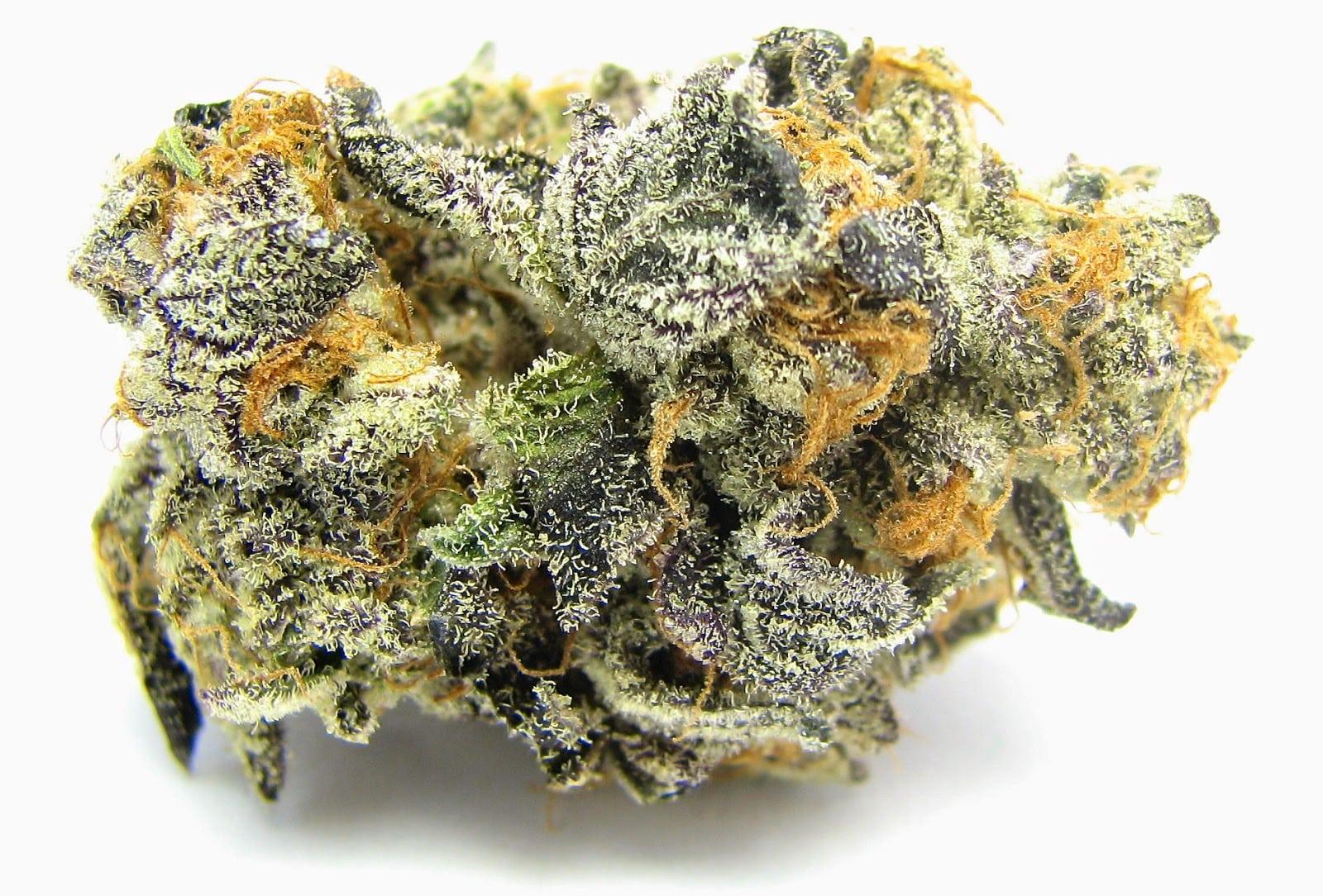 The 5 Strongest Marijuana Strain's On The Planet