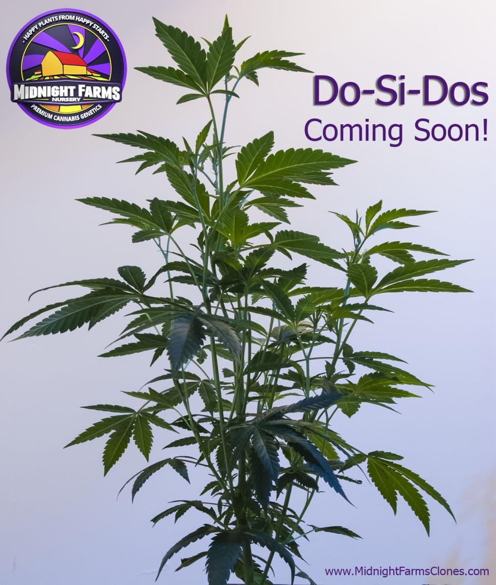 Do Si Do – Coming Soon! – Midnight Farms Clones