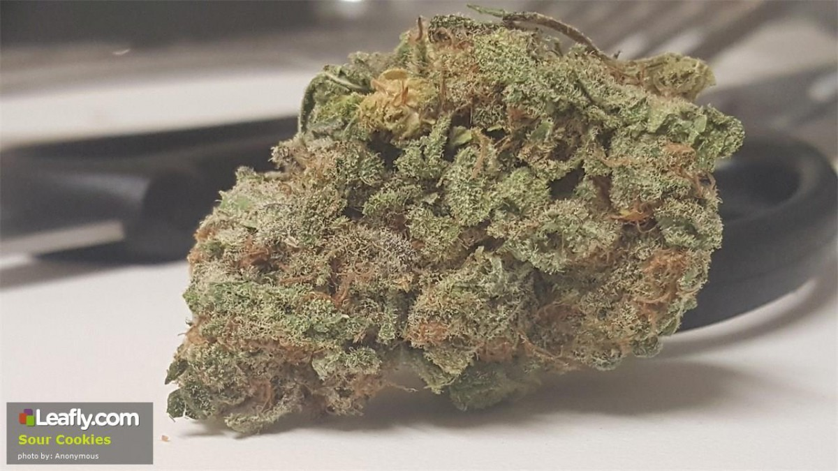 Sweet And Sour Cookies Strains To Liven Up Your Christmas Season