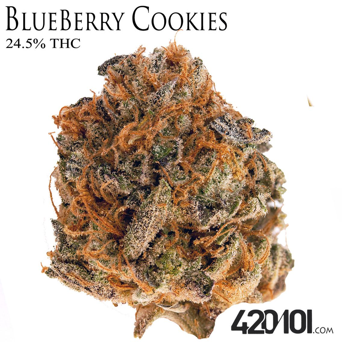 Blueberry Cookies Aka  Blue Cookies  Is A Popular Indica Dominate