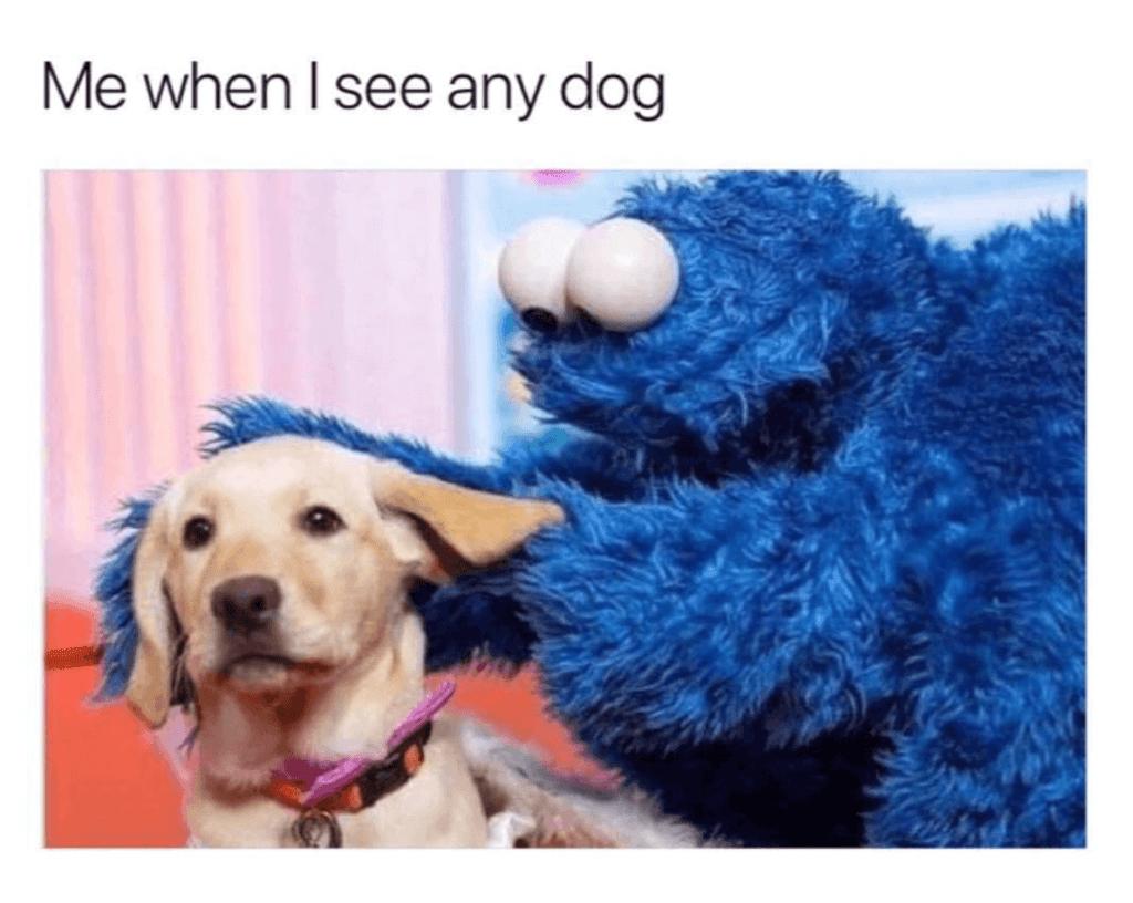 Cookie Monster Dog Meme