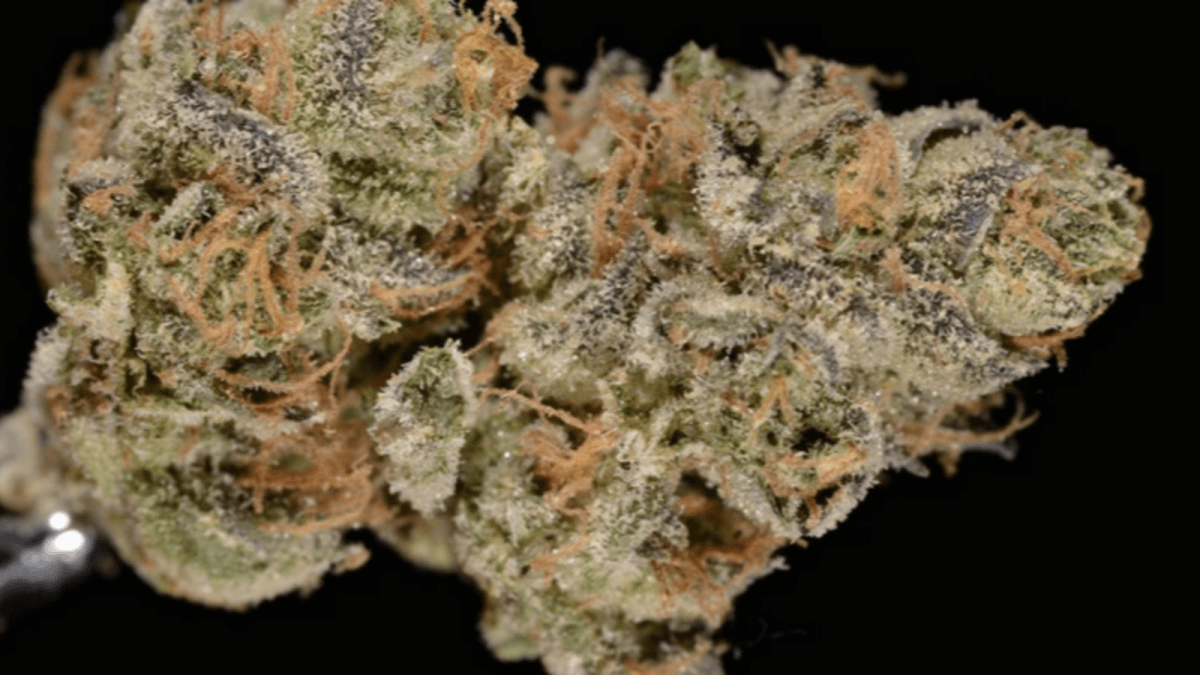 Girl Scout Cookies, Or California's Most Notorious Strain Of Cannabis