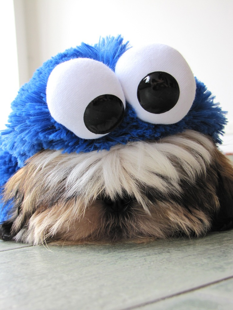 Sesame Street Dog Costume & Prince Charming Dog Costume At