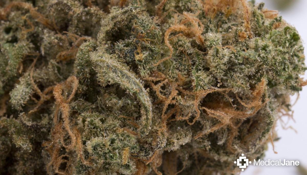 Blue Moon Marijuana Strain (review)