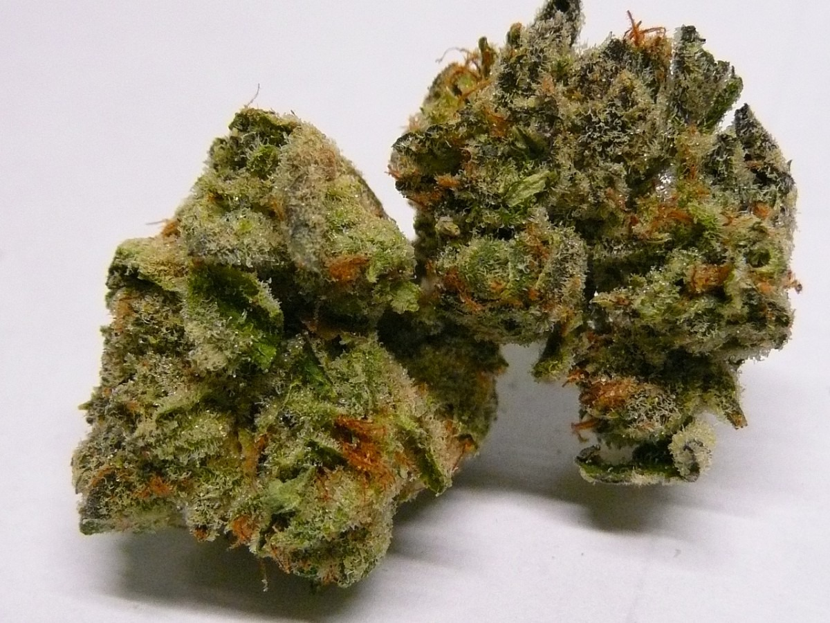 The Ultimate Cookies Kush Strain Review