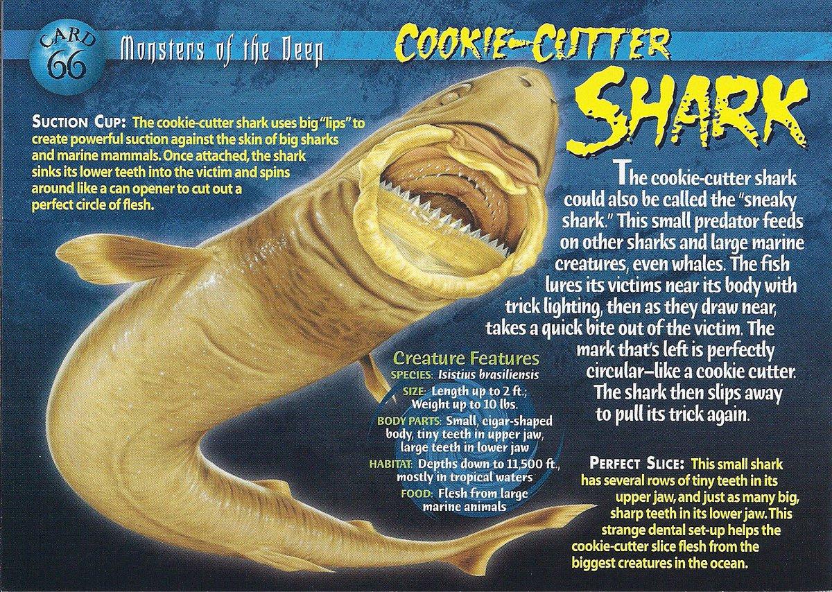 Helentheshark On Twitter   Let's Talk About The Cookiecutter Shark