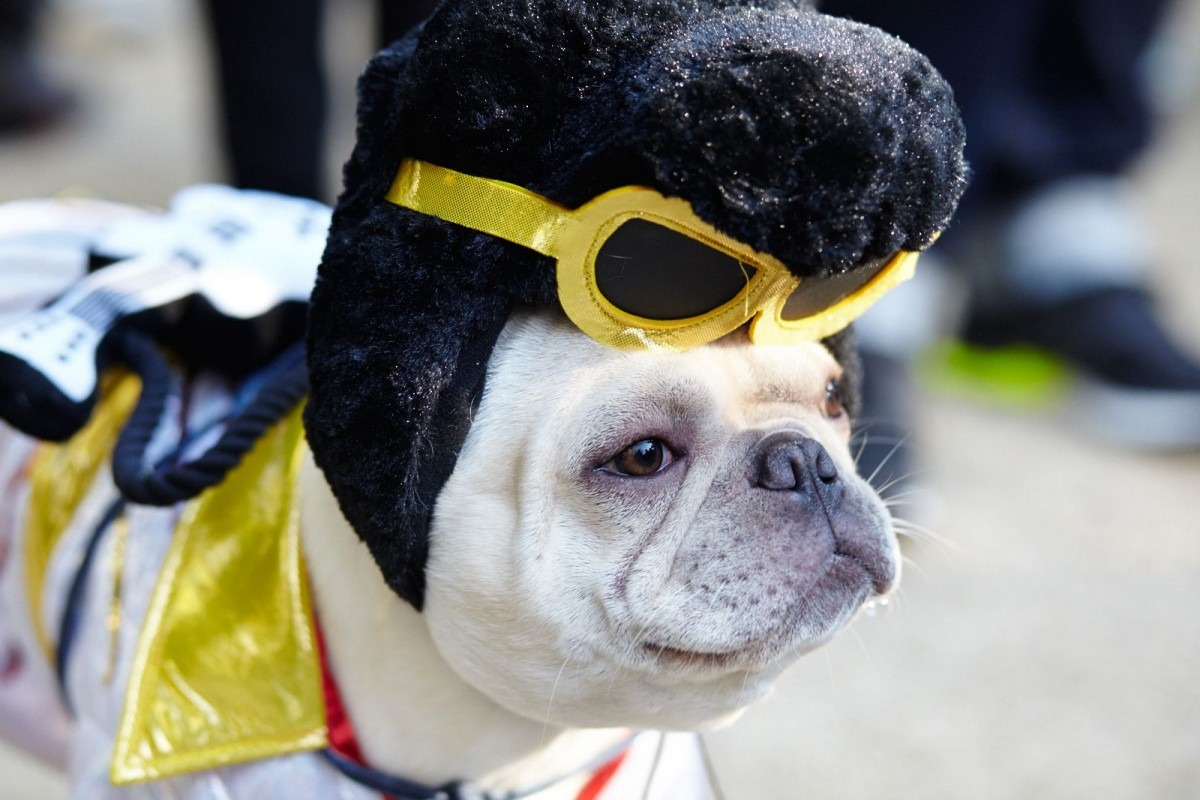 Fun Halloween Costume Ideas For Your Pup!