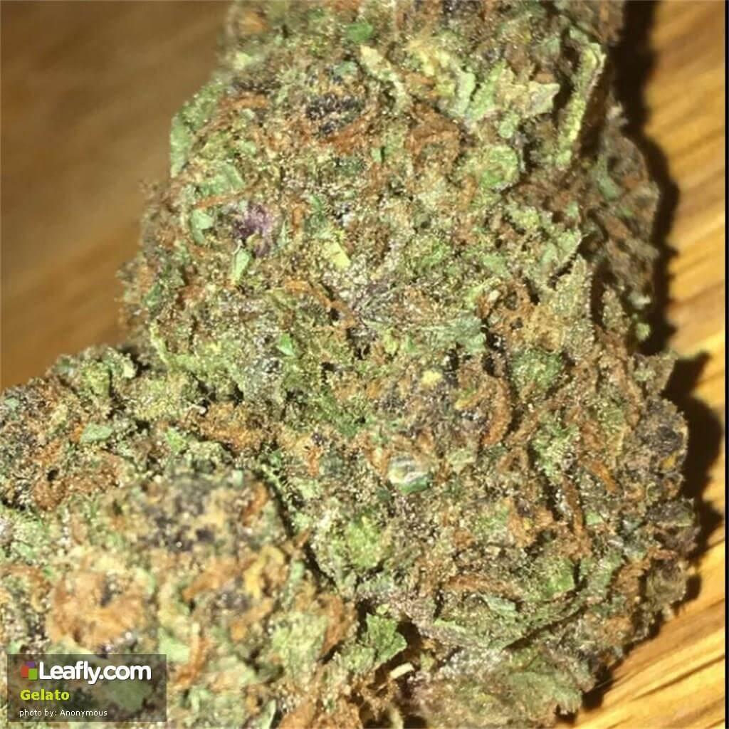 Marijuana Gelato Strain Review