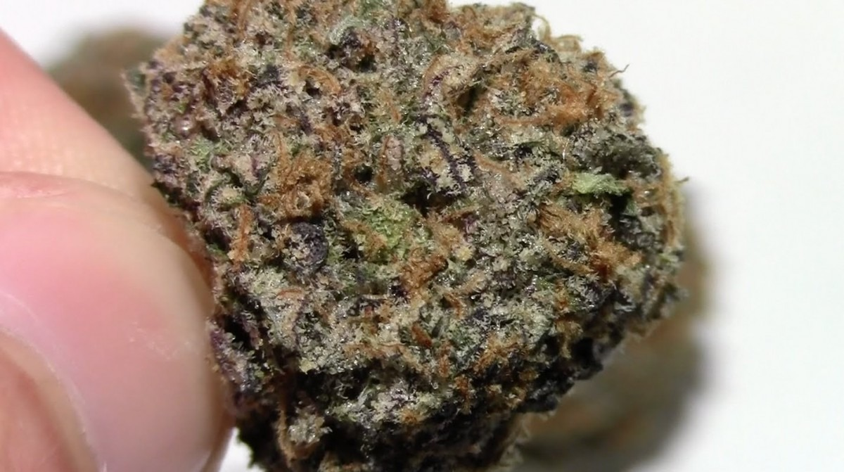 Strain Review  Bacio Gelato  41 Girl Scout Cookie Flower